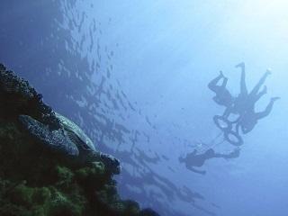 守護海洋  全民行動