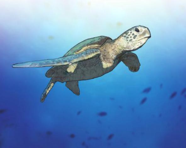 在海中飛翔,海龜保育講座回顧
