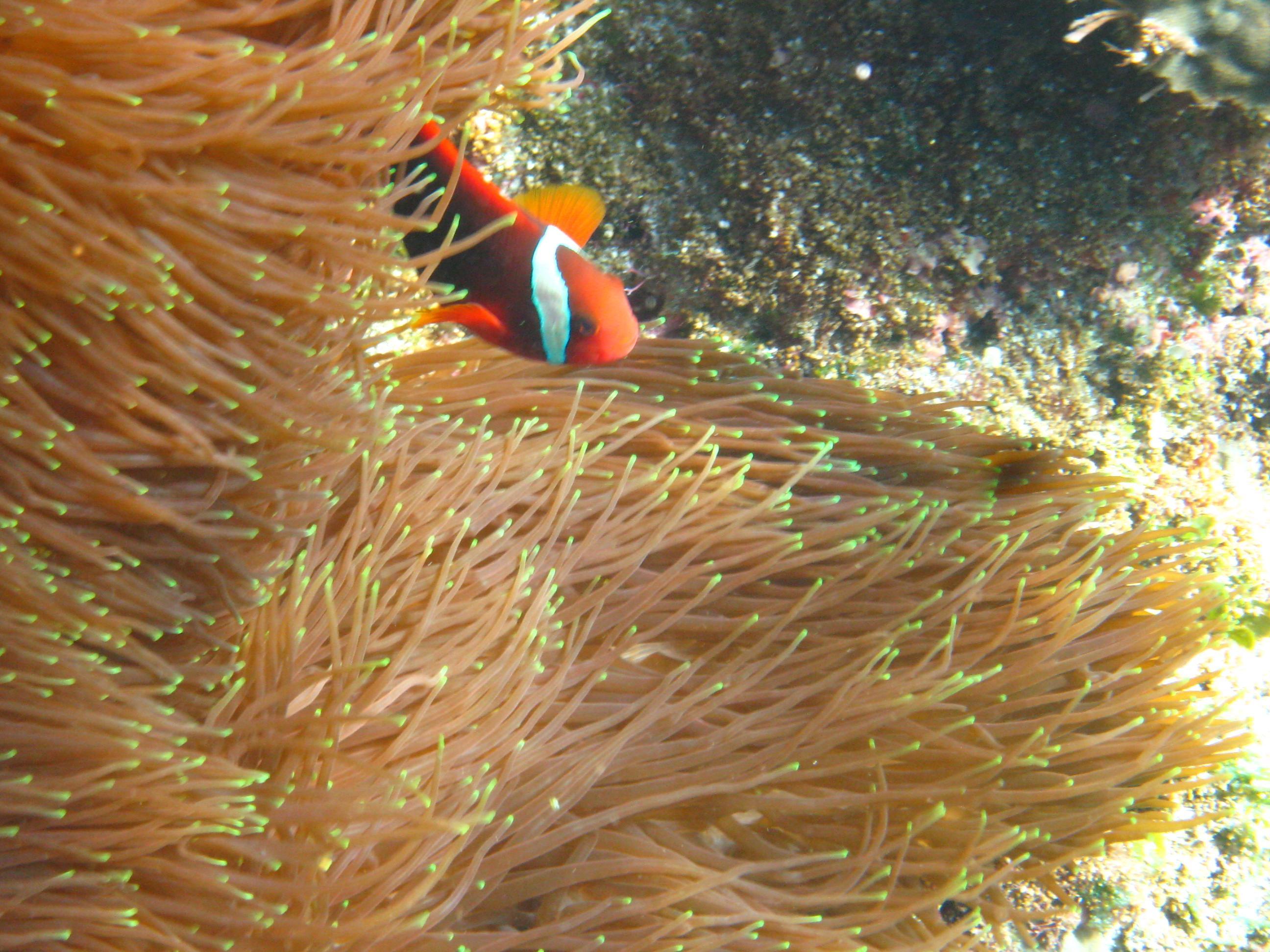 珊瑚通常生活陽光充足的溫暖水域嗎?