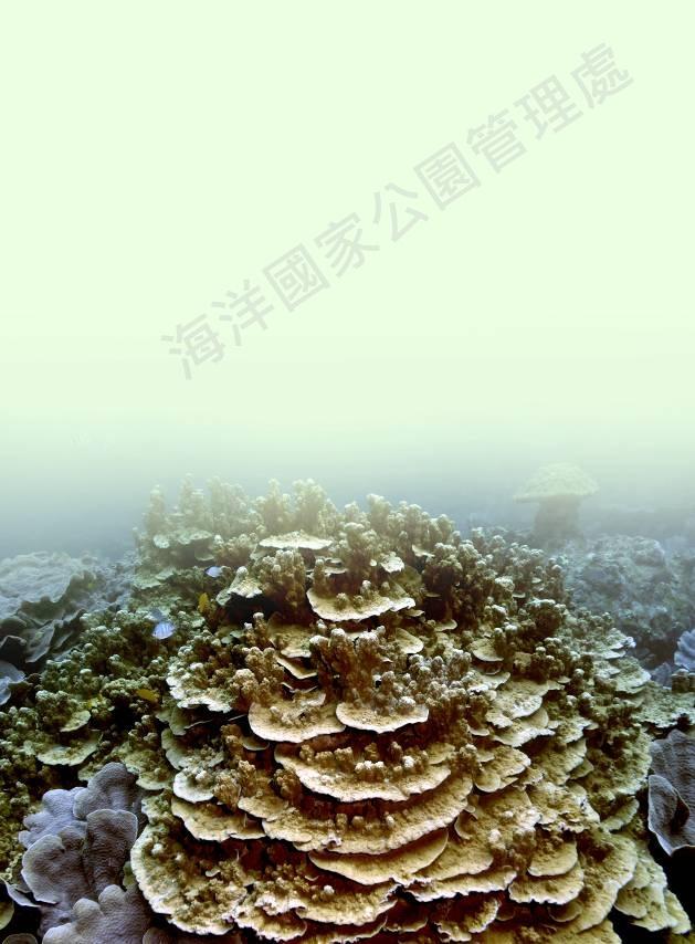 聯合微孔珊瑚
