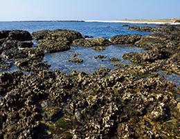東北邊海岸景觀(潮池)
