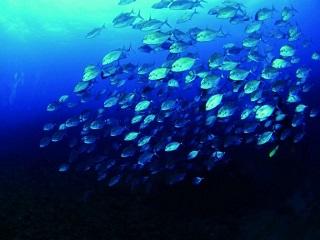 看見「魚線的盡頭」