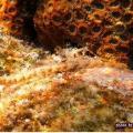 Dongsha Atoll Photo Album 2