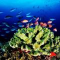 2010珍eye海洋攝影比賽得獎作品--水下世界組